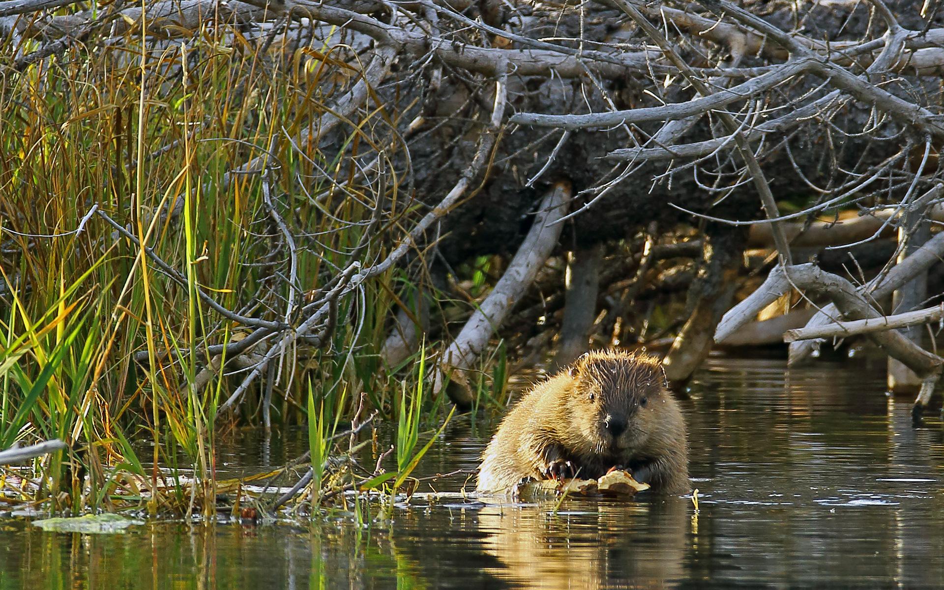 Wuskwatim is Cree for Beaver Dam